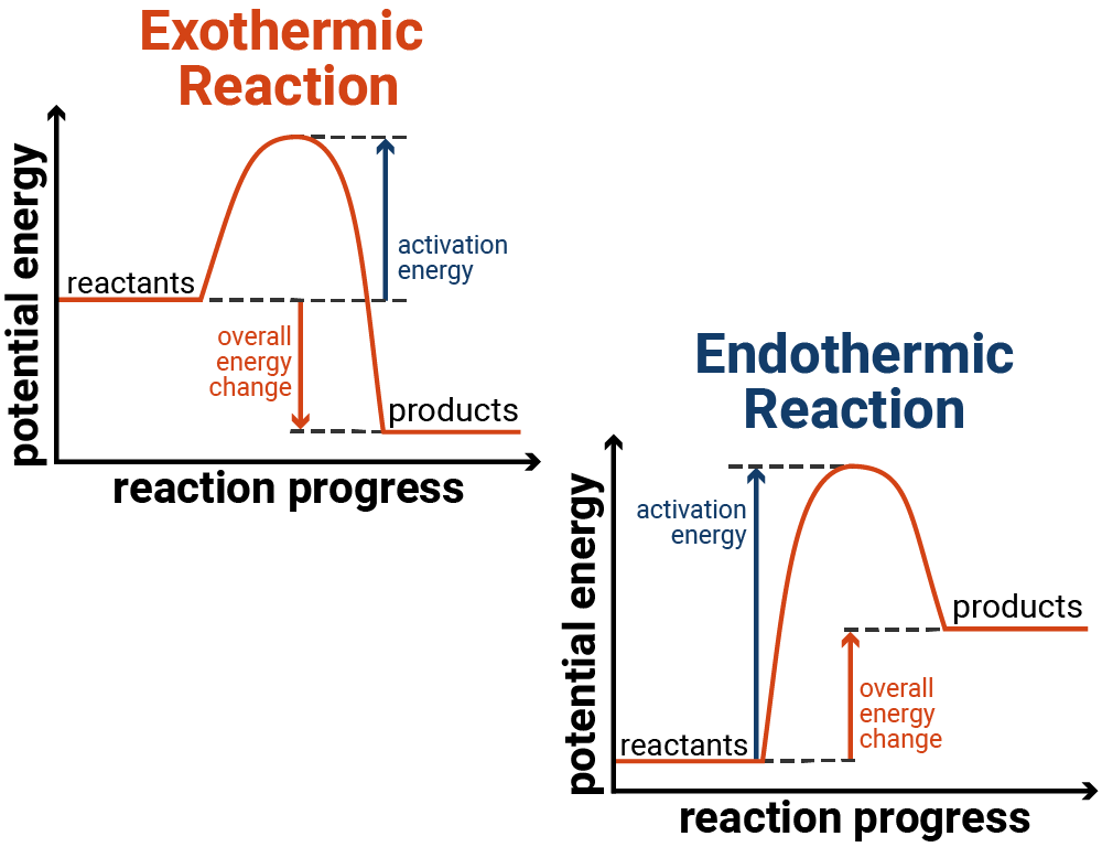 Reaction Profiles of Exothermic and Endothermic Reactions